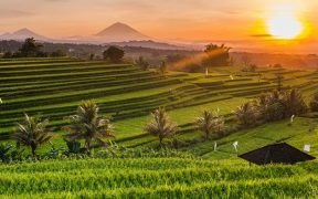 Destinasi romantis Ubud, Bali
