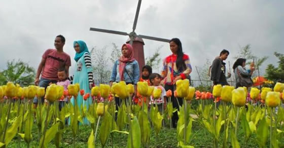 small world, baturraden,bunga tulip,miniatur kincir angin