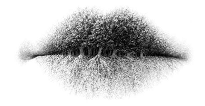 Bibir, Pohon, atau Akar? Obyek Pertama yang Kamu Lihat Mengungkap Kepribadianmu