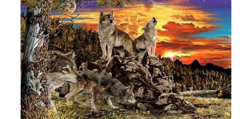 Tes Kepribadian Berapa Banyak Jumlah Serigala